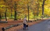 Wandeling in het park