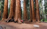 Sequoia's, National Park, USA